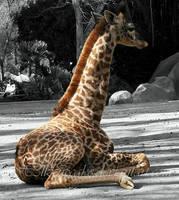 Baby Giraffe by h3llzcupcake