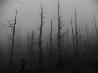 Creepy trees by h3llzcupcake