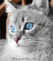 Pirate cat by h3llzcupcake