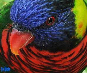 A very Nice bird by h3llzcupcake