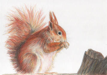 Squirrel by Galatea-LE