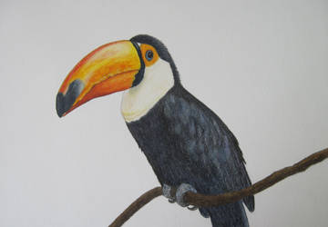Toco Toucan by Galatea-LE