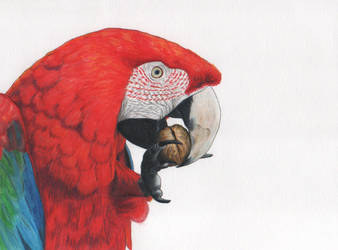 Parrot 3 by Galatea-LE