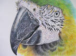 Parrot 4 by Galatea-LE