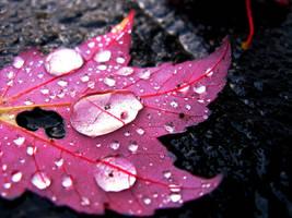 November Rain by Charlie-Mcgillicutty