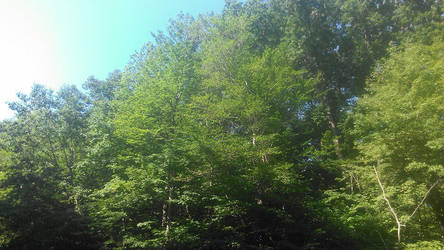 All That Green by lostkingdom