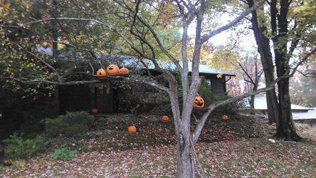 Jack-O-Lantern's In A Tree by lostkingdom