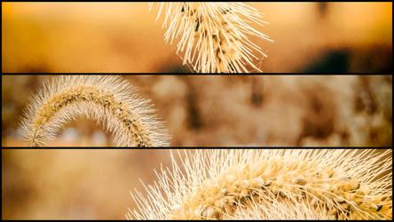 Autumn Grass by ian-roberts