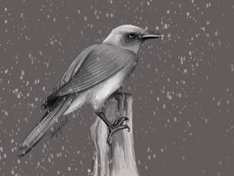 Bird in the Snow by LaufingIdiot