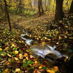 Golden Autumn by dSavin