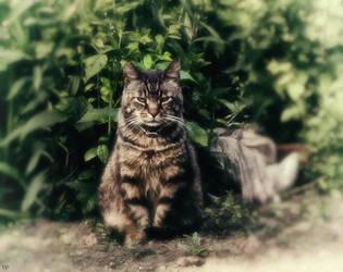 Vintage Cat by Valdis108