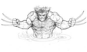 Wolverine sketch by Max-Dunbar