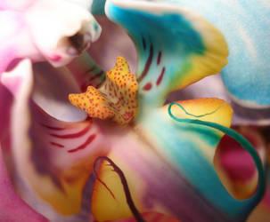 Real Happy Flower by RAINBOWedROSES