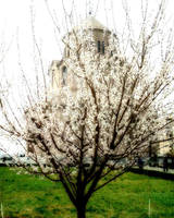 Spring in Yerevan by davo83