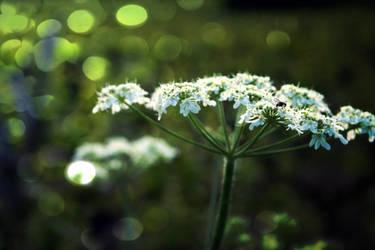 wild flower. by OldTales