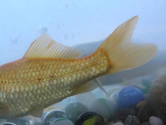 fish 1 by dark-dragon-stock