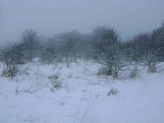 snowy fields -fog- 84 by dark-dragon-stock