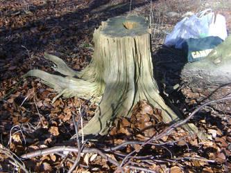 tree stump stock 1 by dark-dragon-stock