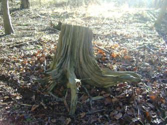 tree stump stock 2 by dark-dragon-stock