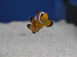 fish stock 6 by dark-dragon-stock