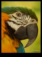 Parrot by Leitor