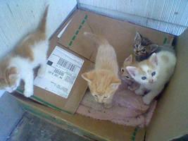 Its Kitten Season by ZombiexFood
