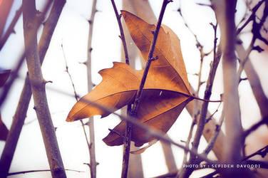 Wind rush by SepidehDavoodi