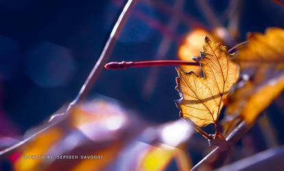 Falling leaves by SepidehDavoodi