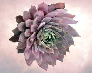 rosette by Luxington