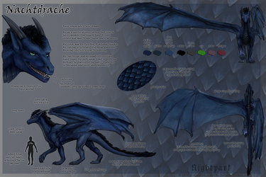 Nachtdrache - Reference Sheet by Nightpark