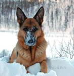 My Beautiful Snow Princess by Ingalinn