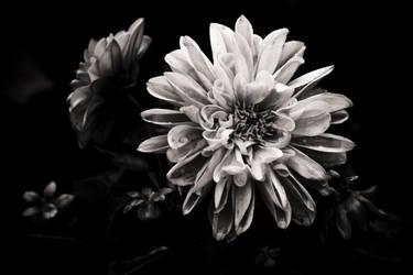 Flower-1 by Treke