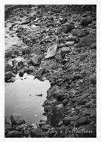 The River.. by RoyWicaksono
