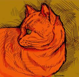 Cat by wick-y