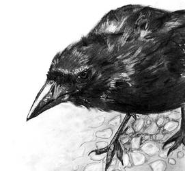 Raven by melissrrr