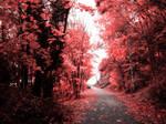 Kuneticka hora - road by jablar