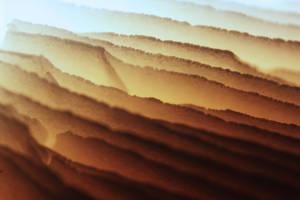 Foggy by TriinErg