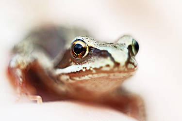 A little frog by TriinErg