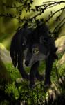 AT: A Curious Wolf by AnastasiyaVB