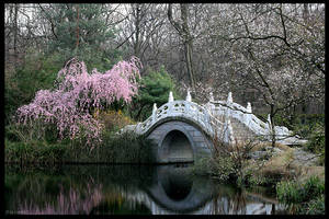 The chinese garden by Lunchi