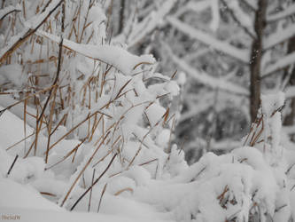 Photo68. Winter 8 by TheSofN