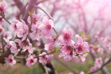 flower 2 by nice521
