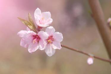 flower 3 by nice521