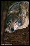 calm watcher by Wodenswolf