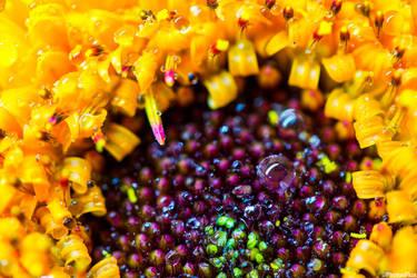 Drops On Blossom by RaumKraehe
