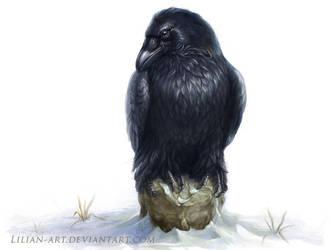 Raven by Lilian-art