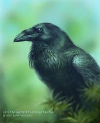 I love ravens by Lilian-art