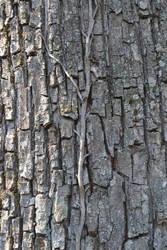 tree1 by LowLandLady
