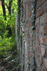 ivy on brickwall by LowLandLady