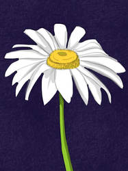 Daisy by GKoch
